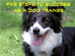 Five Steps to Success as a Dog Trainer